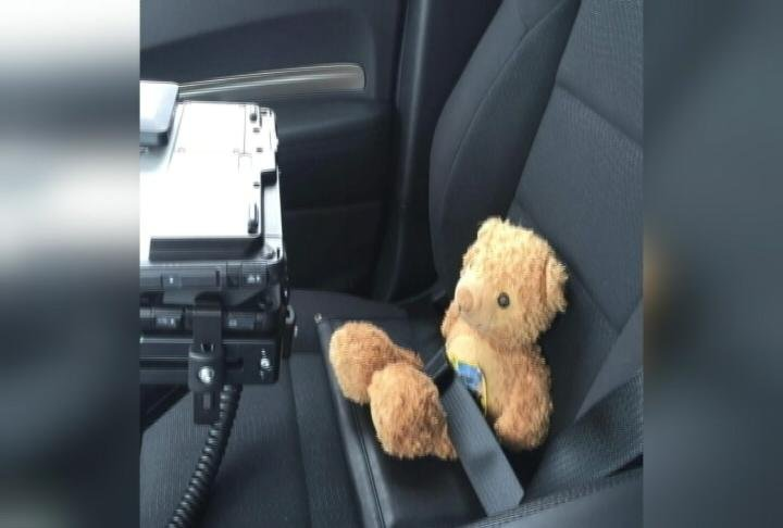 Teddy is strapped into a squad car to return home! Courtesy: Tracy Remme
