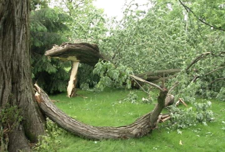 A huge branch snapped off of a tree in the backyard of Art and Joyce Schulz home in Elgin.