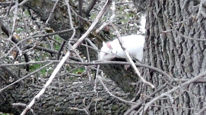 Albino squirrel in Pine Island (Photo by Jim Alm)