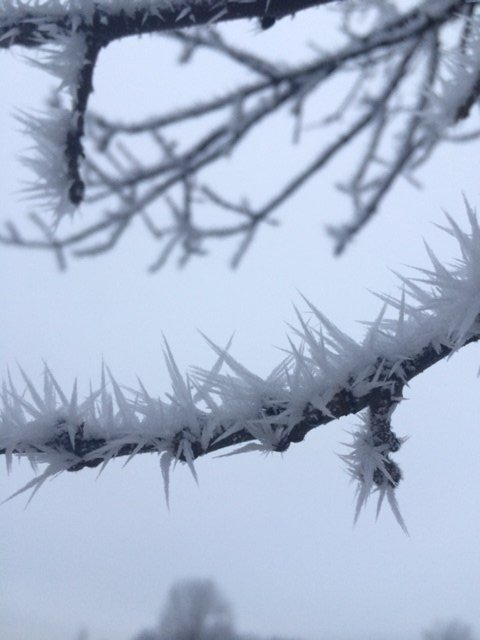 Hoar frost outside the KTTC studios