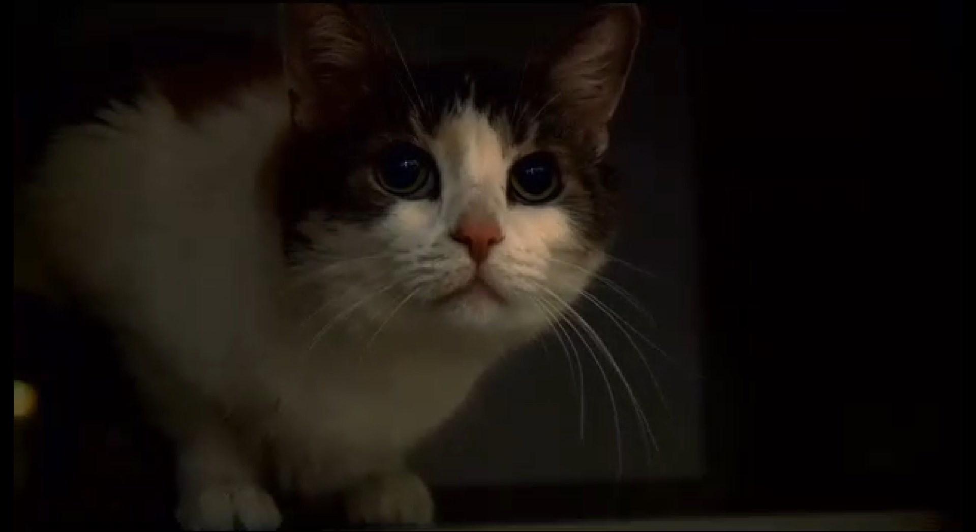 Winnie the cat, rescued from a duffel bag in the Winnebago River