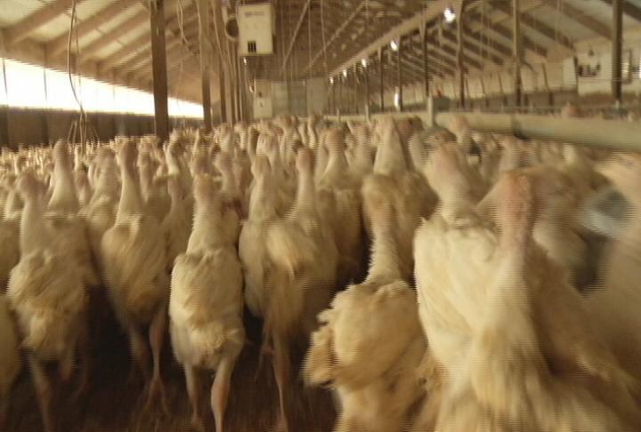 Steele County takes steps to prevent spread of avian flu