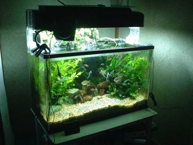 The aquarium bluefield wv