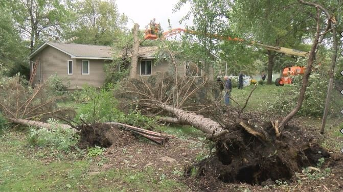 A tree was uprooted in Medford, Minnesota during Thursday night's storm